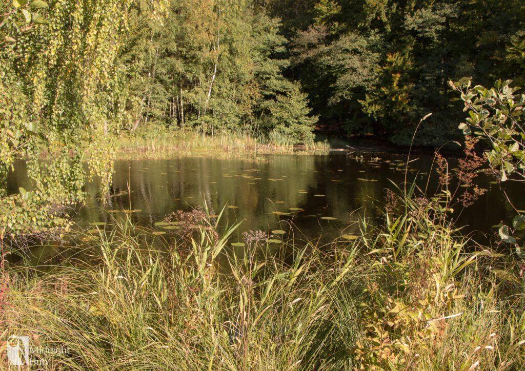 skogen11_mh-1024x724